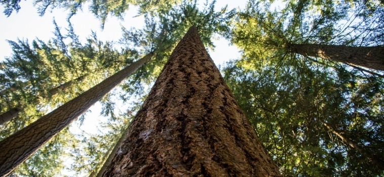 12 reasons why wood construction is an effective means of tackling the decarbonisation of buildings